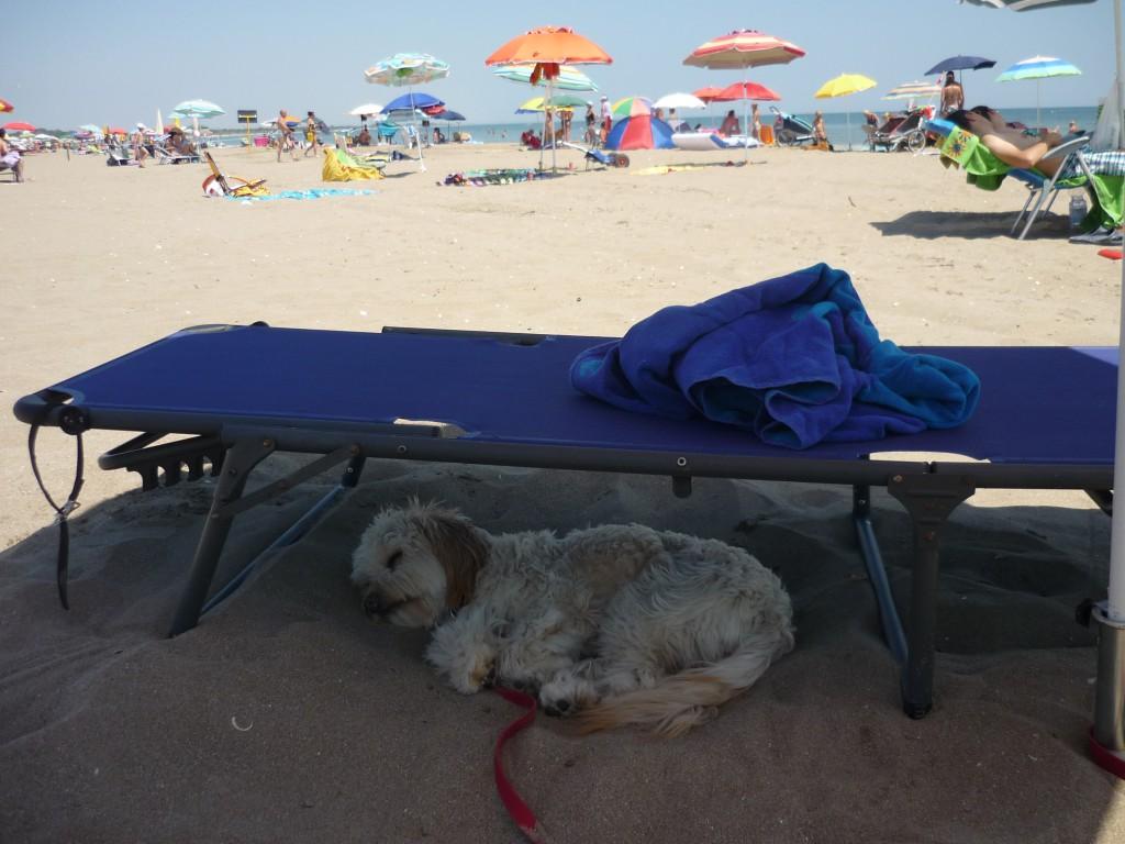 Die Schifamhündin Bonny ist auch im Urlaub dabei und genießt die gute Meerluft, den Schatten und den warmen Sand.